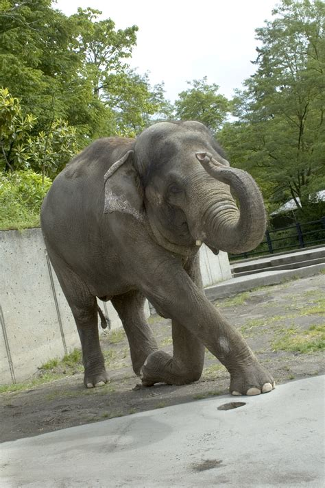 rama elephant asian tags zoo oregon kneel orig
