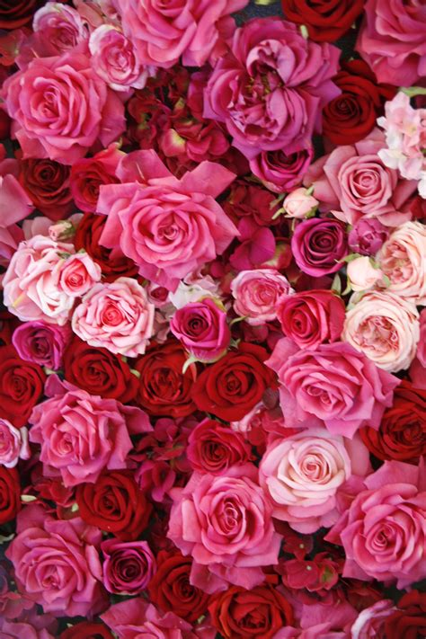 roses colors meaning 14 color meanings what do the colors of roses