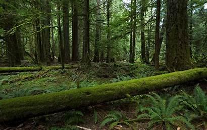 Forest Moss 4k Wallpapers Desktop