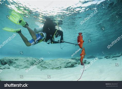 diver grouper catching speargun shutterstock