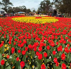 Floriade Springs To Life In Canberra Travel With Michelle