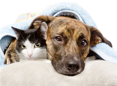 May Is National  Ee  Pet Ee   Month Remember Foodborne Illness Can