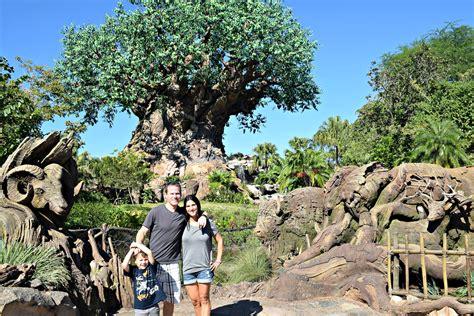 trip  disney world top  attractions  animal