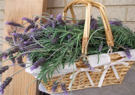 Best Herbs To Grow For Family Health
