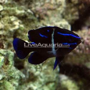 Pin by Anthony Jewell on SaltWater Fish