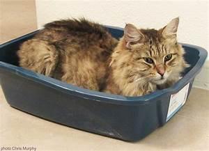 Litiere Chat Sans Odeur : quelle liti re choisir pour son chat absolument chats ~ Premium-room.com Idées de Décoration