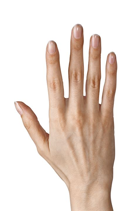 Five Fingers by Showing Five Fingers Png Clipart Image Gallery
