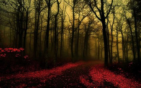 pretty forest 20 forest backgrounds wallpapers free creatives