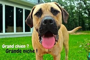 Niche D Intérieur Pour Chien : niche pour grand chien guide d 39 achat et comparatif ~ Dallasstarsshop.com Idées de Décoration
