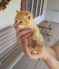 miniture cats mini cat mini chat chats