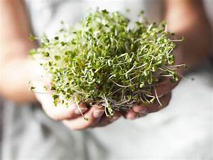 Better Boost From Broccoli Sprouts