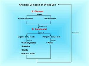 The Chemical Composition Of Cell