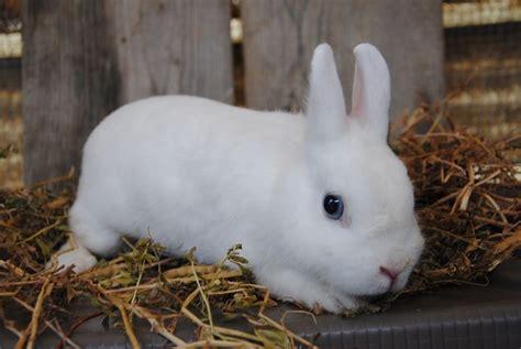 Gabbia Coniglio Nano Prezzo - gabbia coniglio nano conigli nani gabbia coniglio nano