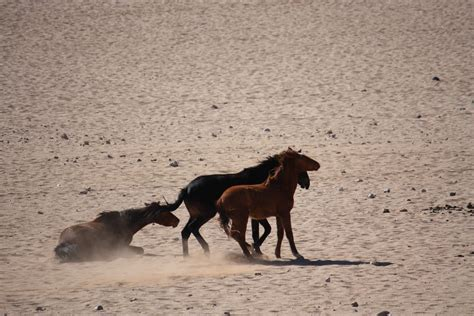 horses wild africa namibia overlanding