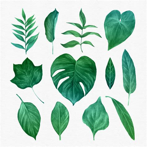 Clipart Vector by Green Leaves Clipart Set Free Vector Stock