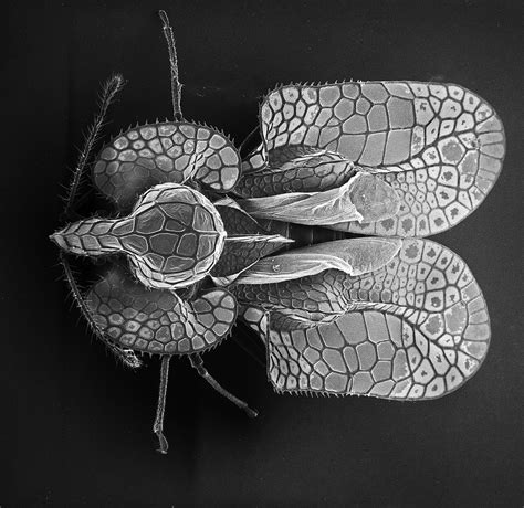 insect photography  electron microscope fubiz media