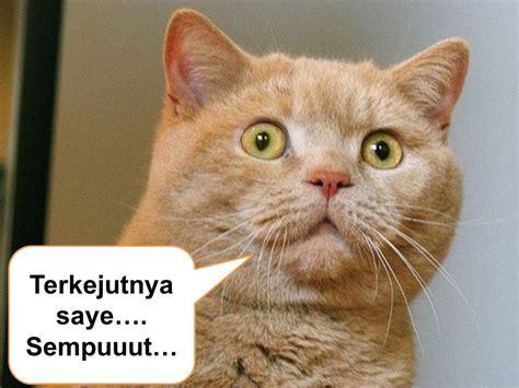 gambar kucing lucu syurga  indah