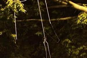 'Nooses' Found Hanging on University of Delaware Campus ...