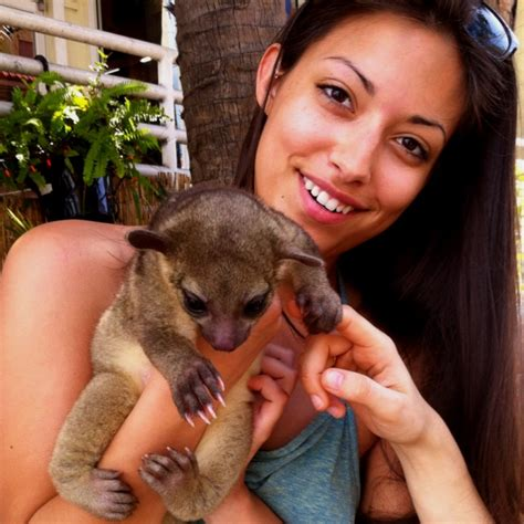 kinkajou pet 17 best images about pet mammal on pinterest guinea pigs pets and sugar gliders