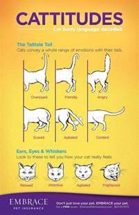cat language learn to read your cat s language for more on cat