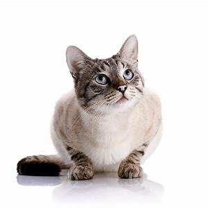 Weißer Wurm Katze : foto katze blick tiere wei er hintergrund ~ Markanthonyermac.com Haus und Dekorationen