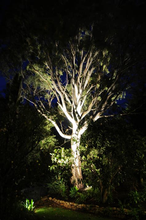 lighting up gum trees with 27w led outdoor bring your