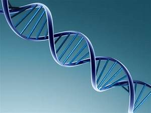 Mysteries Of Dna Continue To Amaze