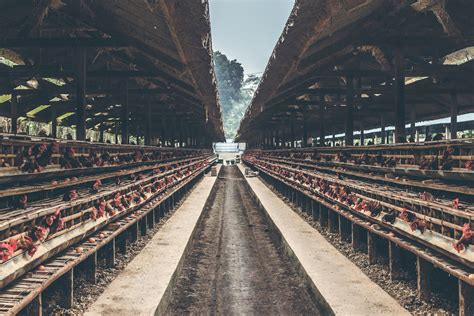 oklahoma places  temporary ban   large scale poultry