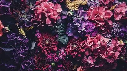 Wallpapers Floral Mac Desktop Iphone Rose Aesthetic