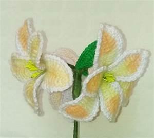Amaryllis Zum Blühen Bringen : amaryllis h kelanleitung ~ Lizthompson.info Haus und Dekorationen