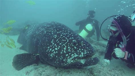 grouper friendly