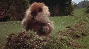 If You Are Gonn... Caddyshack Gopher