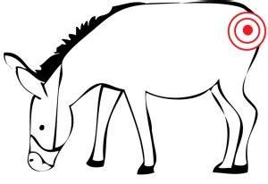 pin  tail   donkey