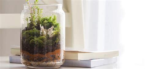 create  bottle garden   easy steps budget