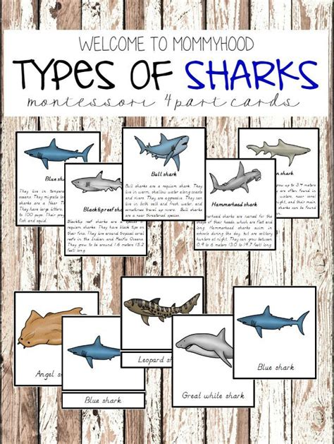 types of preschool curriculum types of sharks montessori cards montessori shark and 670