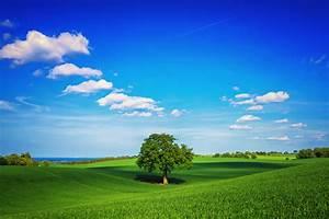 Free, Download, Download, Beautiful, Green, Fields, Wallpaper