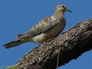 Mute Swan – Nest 2014 Update 8 – DFW Urban Wildlife