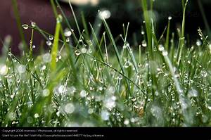 Garten Ohne Gras : zaun ohne ende wiese gras ein lizenzfreies stock foto von photocase ~ Sanjose-hotels-ca.com Haus und Dekorationen