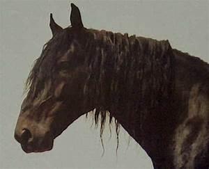 Razze cavalli: Murgese