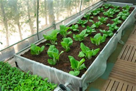 was kann in ein gewächshaus pflanzen nutzgarten anlegen pflanzplan f 252 r mischkulturen