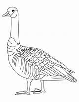 Goose Coloring Pages Canada Goosebumps Drawing Slappy Barren Geese Clipart Library Canadian Printable Getcolorings Getdrawings Popular Coloringhome Ostrich sketch template