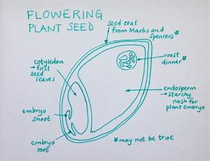 The Wonder Of Seeds  By The Higgledy Newbie  Emma
