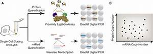 Central Dogma Goes Digital: Molecular Cell