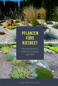Immergrüne Pflanzen Für Kiesbeet : pflanzen f rs kiesbeet sch ne arten die trockenheit vertragen kiesbeet kiesgarten und ~ A.2002-acura-tl-radio.info Haus und Dekorationen