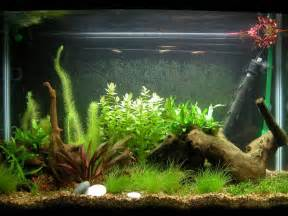 fish tank decorations some interesting fish tank decoration ideas home constructions