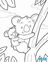 Koala Coloring Pages Koalas Colouring Books Animal Printable Sheets Bear Jungle Animals Pokemon Adult Printables Cartoon Template Templates Princess Babies sketch template