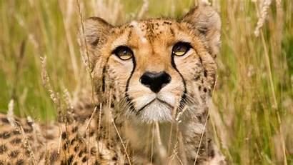 Wildlife Desktop African Africa Wallpapers Wallpapersafari