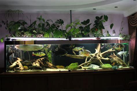 american cichlids tank page