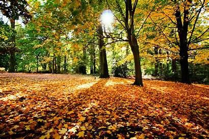 Foliage Pryda Trees Autumn Sun Dog Wallpapers