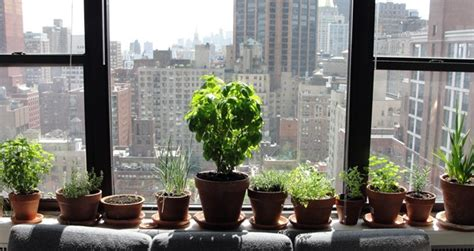 Moving Outdoor Gardens Indoors For Winter